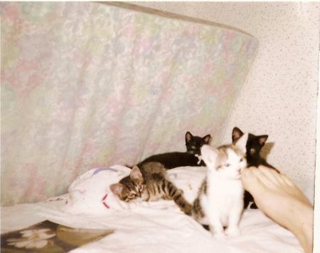 Les 4 chats de la maison