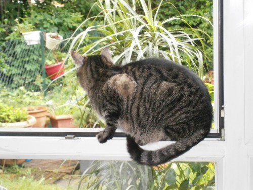 tigret fenêtre.jpg