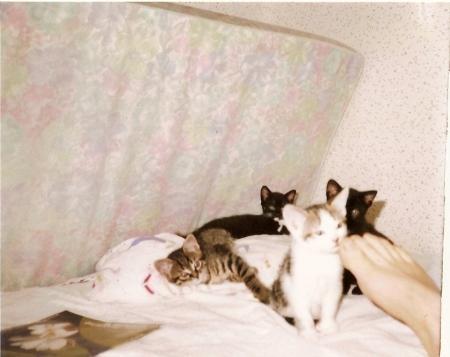 les quatres chats.jpg